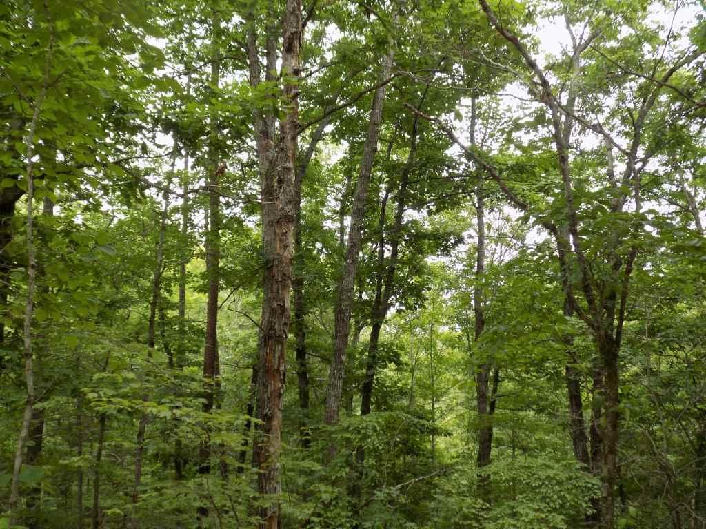 0 Calhoun Trail, Rutherfordton, NC 28139
