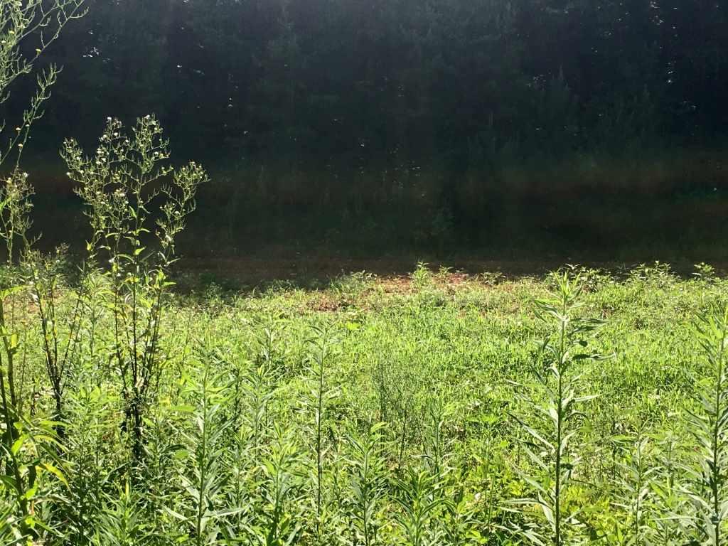 001 Bills Creek Road, Lake Lure, NC 28746