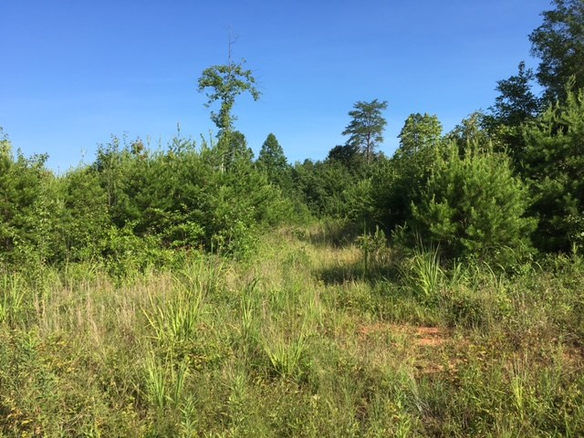 0 Coopers Gap Road, Rutherfordton, NC 28139